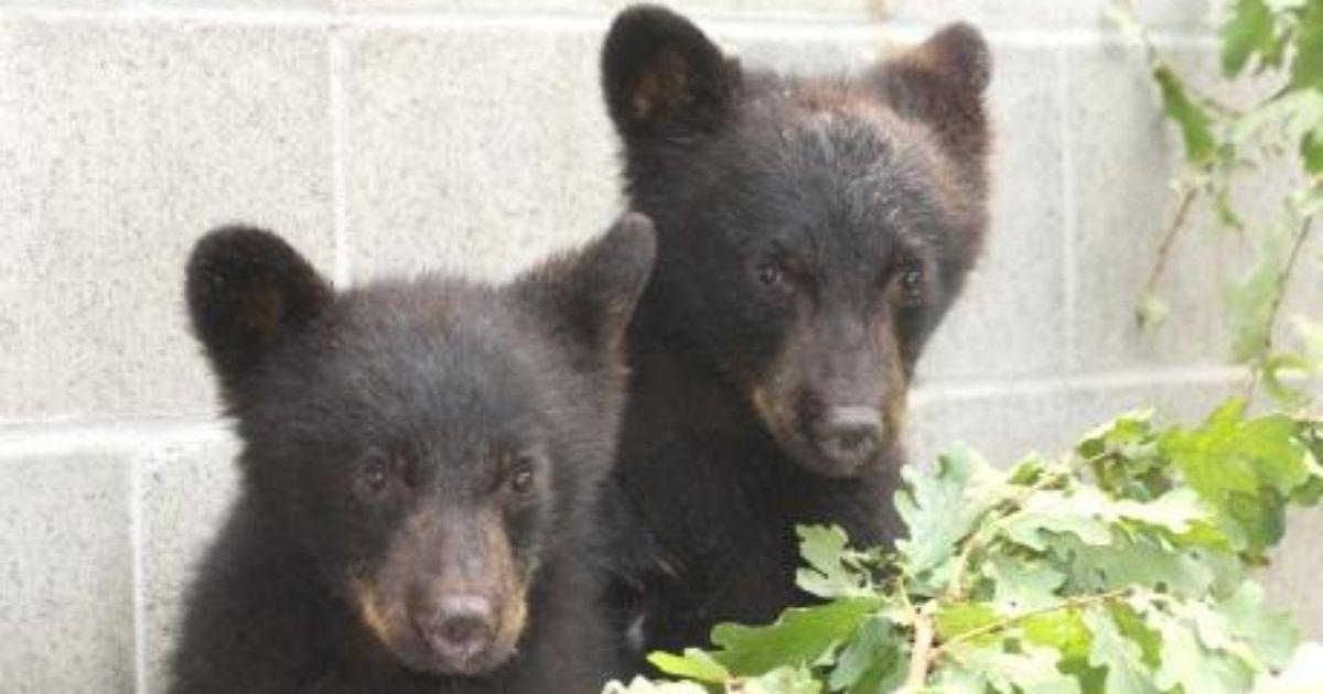 North Island Wildlife Recovery Association