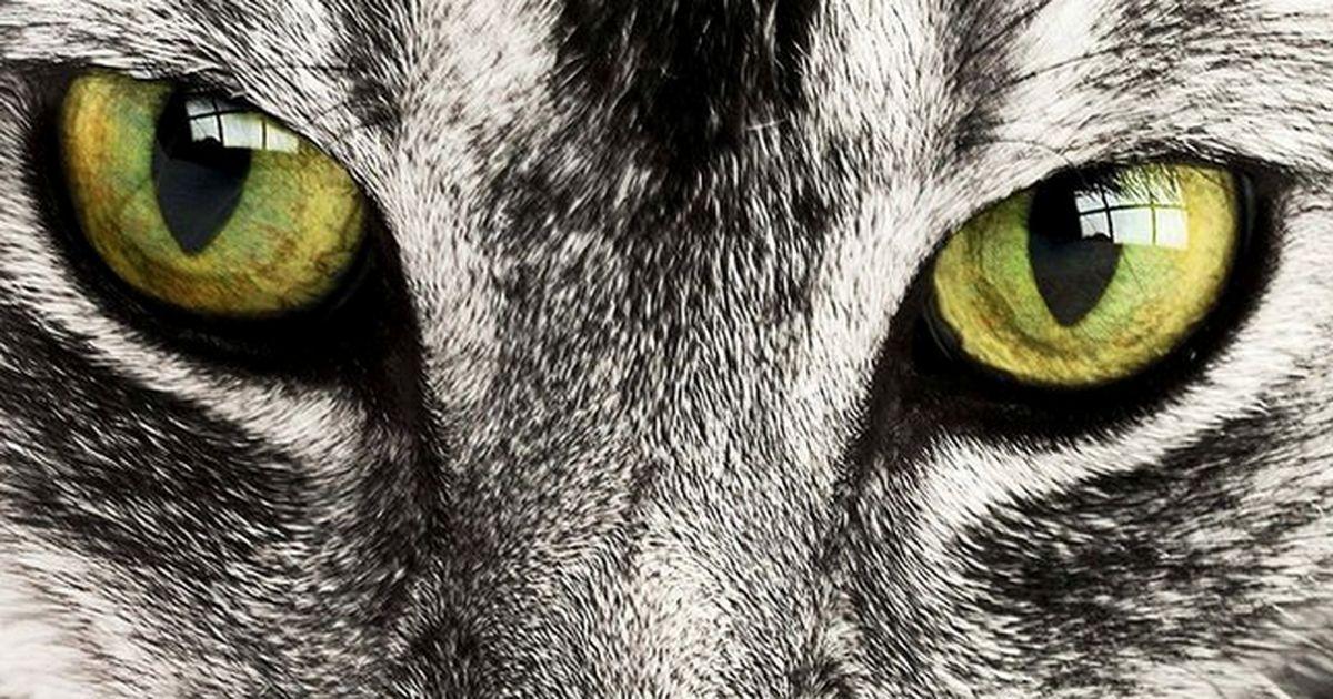 Ihr Wisst Nicht Wie Eine Katze Schnurrt