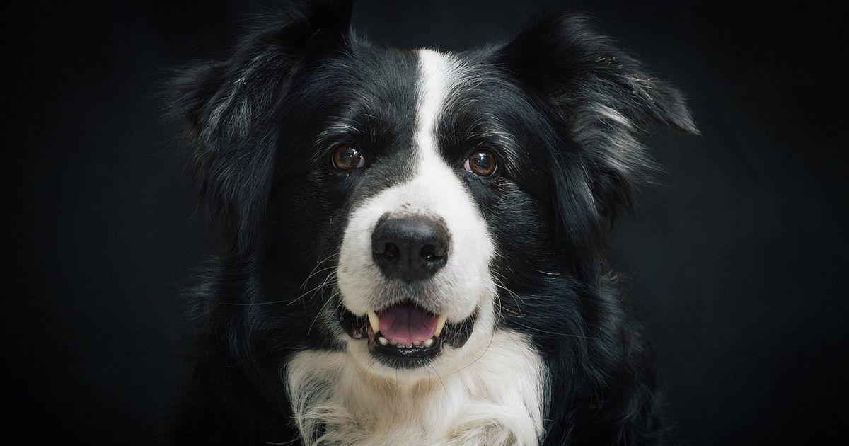 5 gr nde warum dein hund nicht alleine zu hause sein sollte. Black Bedroom Furniture Sets. Home Design Ideas