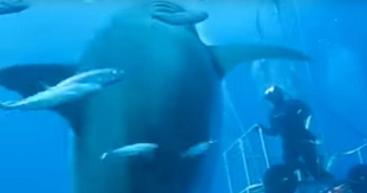 Was Ist Der Größte Hai Der Welt