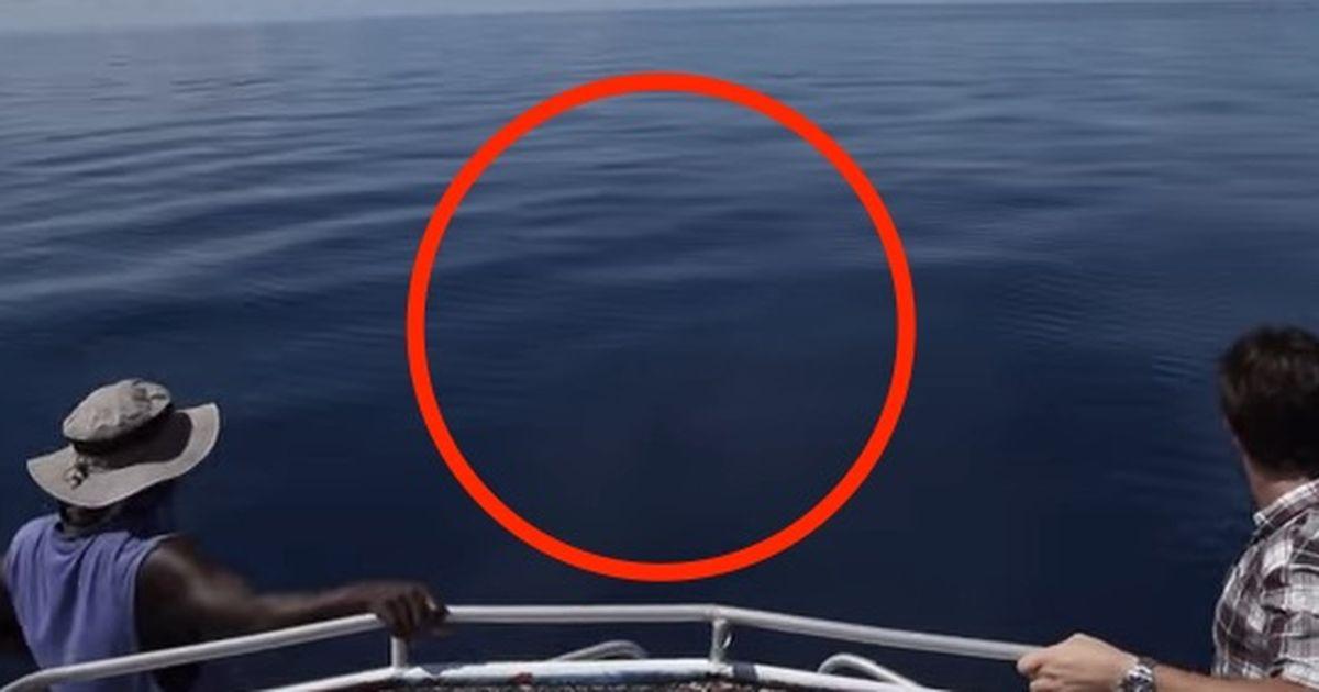 Dieser Hai Wurde Lebendig In Einer Au 223 Ergew 246 Hnlichen Umgebung Gefunden