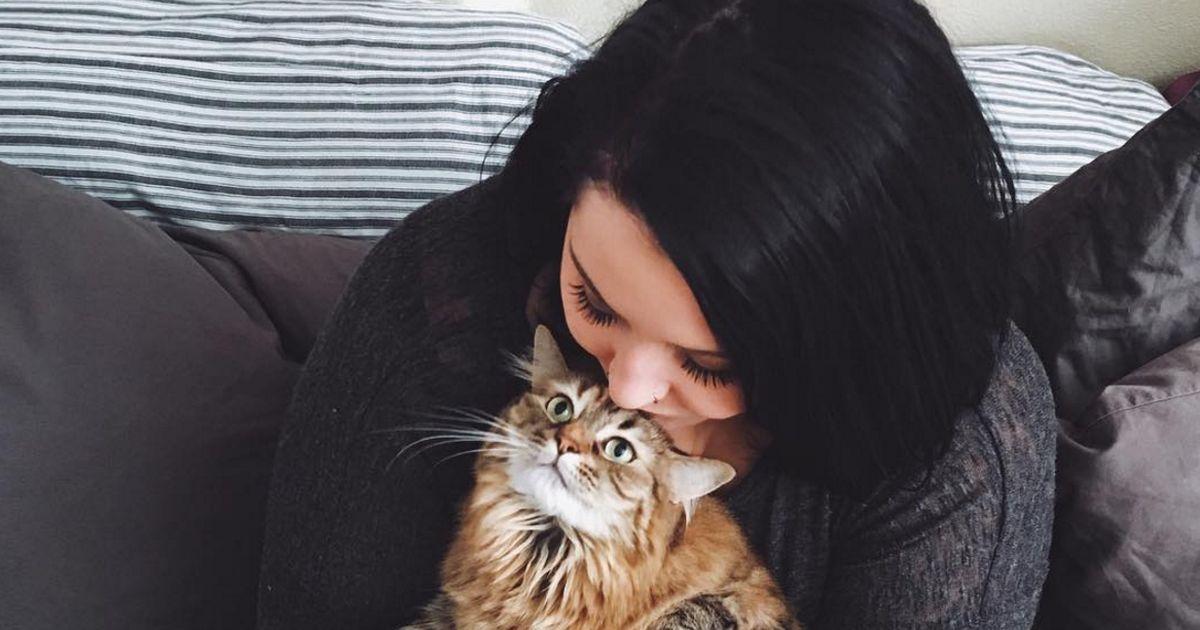 10 dinge die nur katzenbesitzer ber katzen wissen. Black Bedroom Furniture Sets. Home Design Ideas