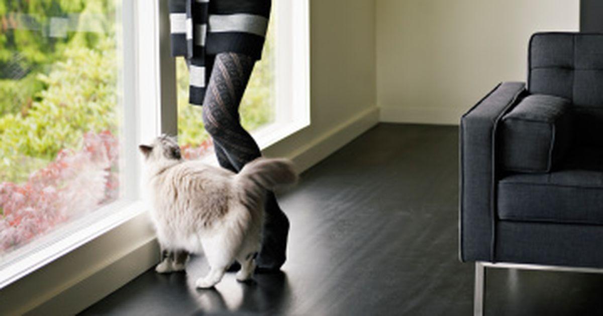 wie lang darf eine katze wirklich allein bleiben. Black Bedroom Furniture Sets. Home Design Ideas