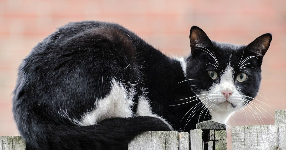 wir haben es immer gewusst katzen studieren uns menschen. Black Bedroom Furniture Sets. Home Design Ideas