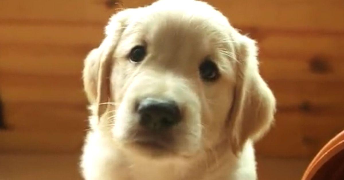 Hundewelpen So F 252 Tterst Du Deinen Kleinen Richtig