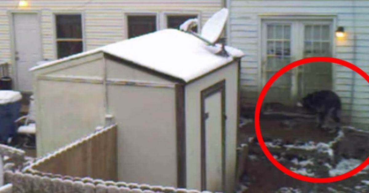 er stellte eine kamera auf um den hund von nebenan zu. Black Bedroom Furniture Sets. Home Design Ideas