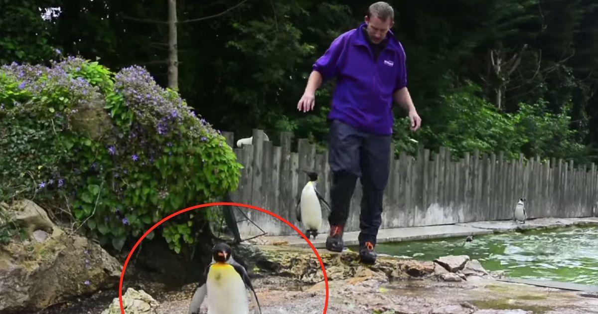 dieser pinguin hatte angst vor wasser was sein trainer dann tat ist genial. Black Bedroom Furniture Sets. Home Design Ideas