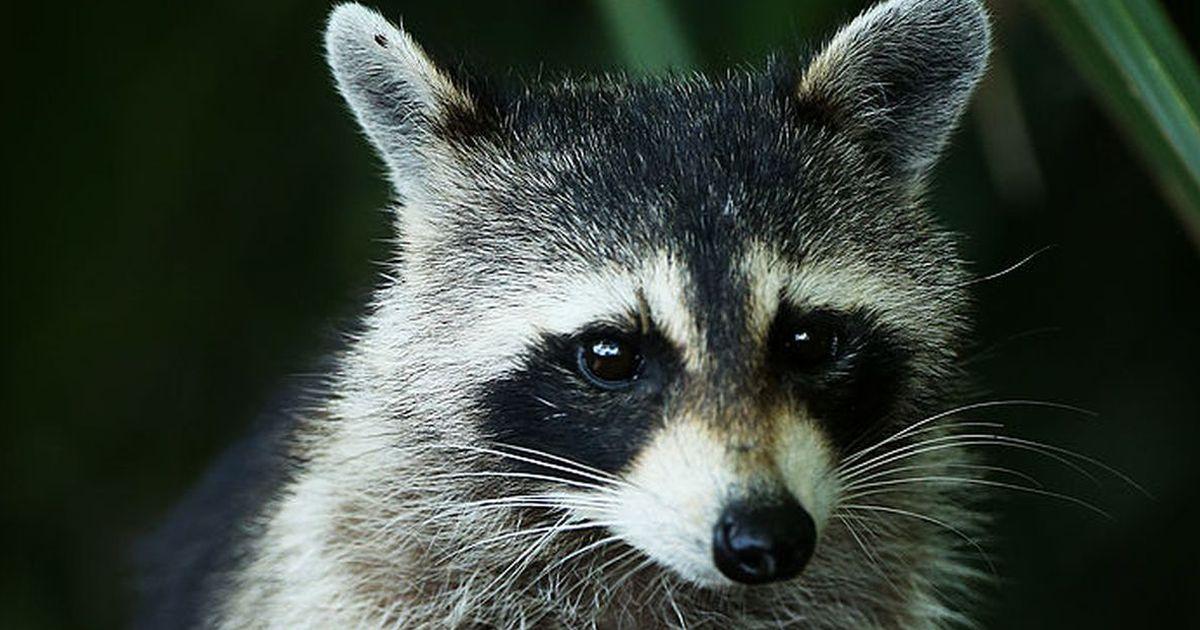 Diese Tiere Sind Der Eu Unerw 252 Nscht