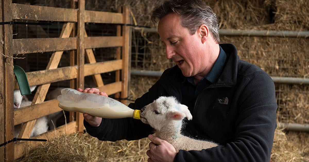 Dieser Landwirt Glaubt Dass Seine Art Zu T 246 Ten Besser F 252 R Das Tierwohl Sei