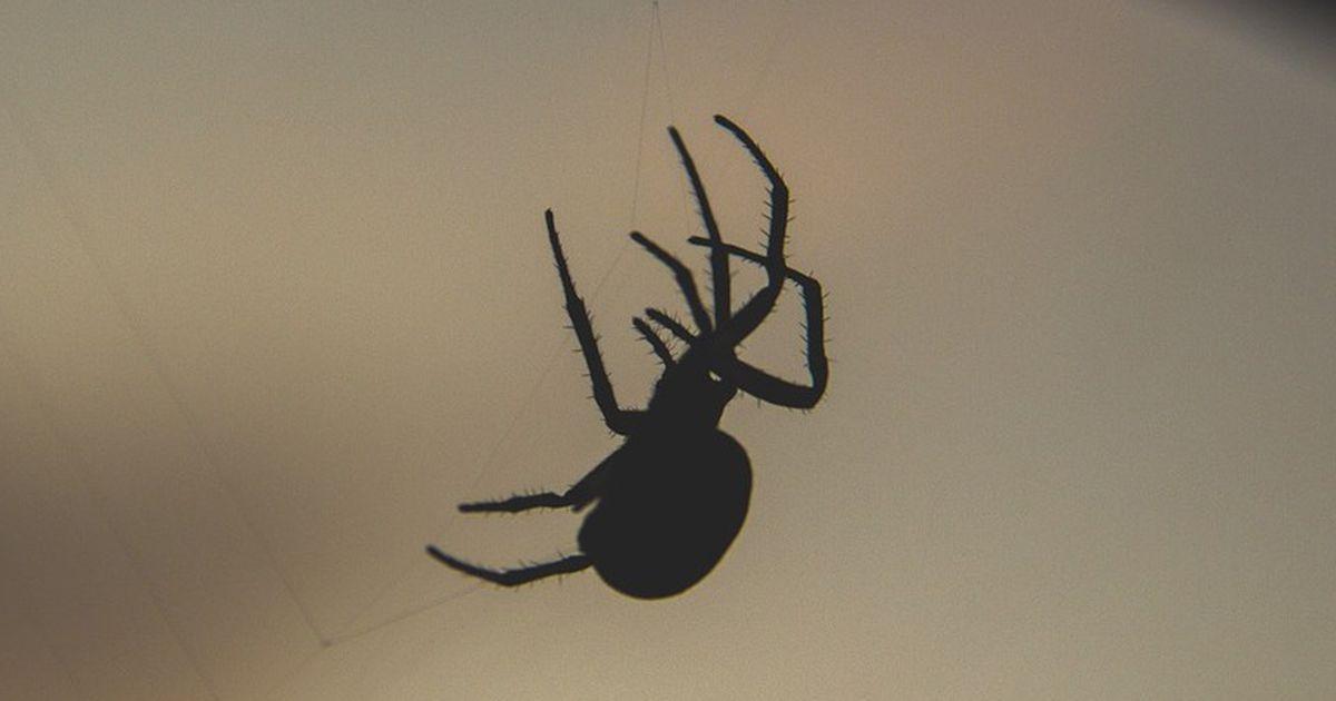 tiersch tzer fordern mehr toleranz gegen verhasste spinnen. Black Bedroom Furniture Sets. Home Design Ideas