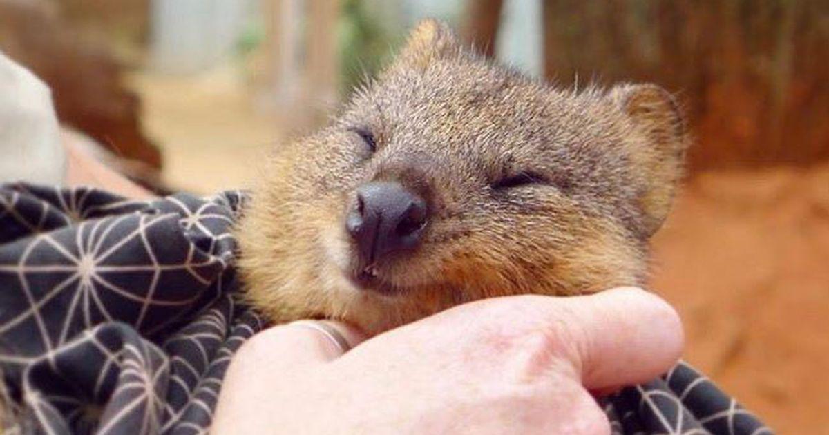 Glücklichstes Tier Der Welt